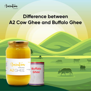 What is the difference between A2 Cow Ghee and Buffalo Ghee