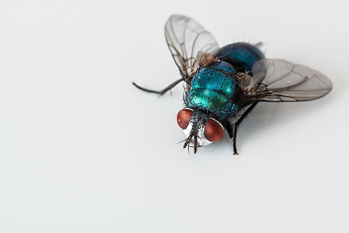plymouth pest control fly control