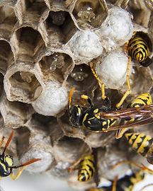 swarm-1903243_1920.jpg
