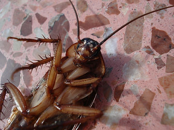 plymouth cockroach control pest