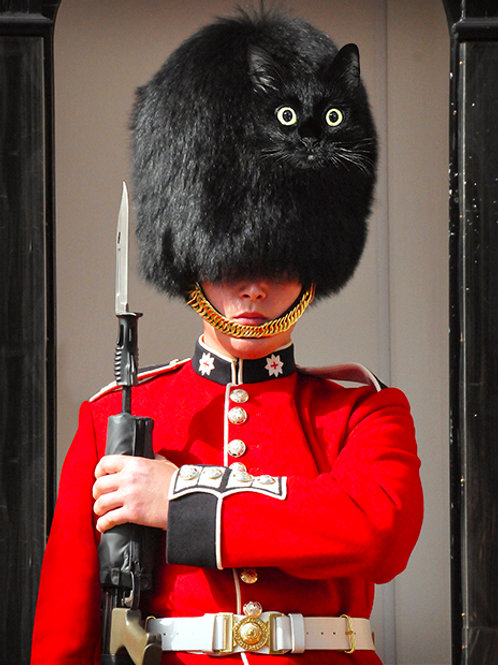 British Guard OwlKitty Postcard