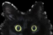 lizzy-eyes_v02.png