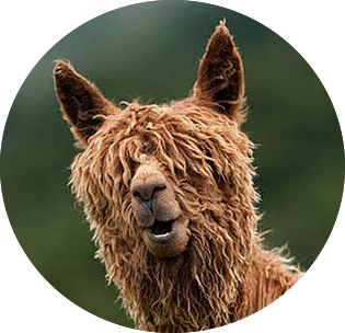 funny-alpacas-with-awesome-amazing-hilar