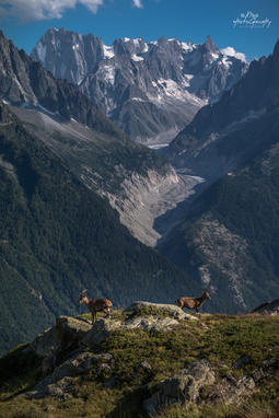 Vue sur la Mer de Glace depuis les lacs des Chéserys - Aiguilles Rouges - Chamonix Mont Blanc