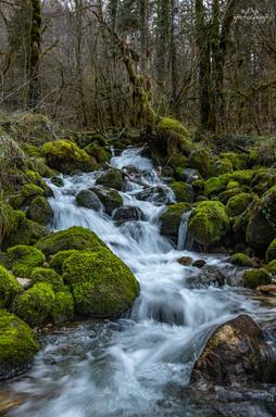 Ruisseau de la Bienne - Jura