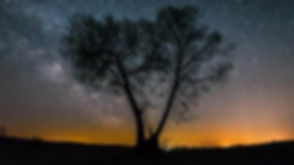 AUSTRALIA NIGHTSKY LONELY TREE.jpg