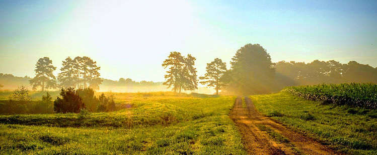 Beautiful bright sunrise with an old country dirt road heading towards the sun_edited.jpg