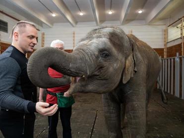 В Большом Московском цирке появился первый собственный слон