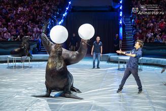 В Московском цирке состоялась первая открытая репетиция на зрителя.