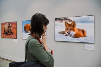 Открывается VIII Общероссийский фестиваль природы «Первозданная Россия»