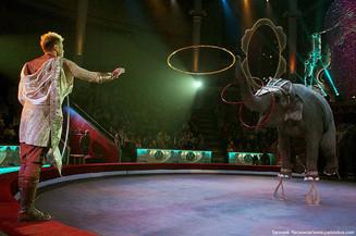 Сказки Индии на манеже Тульского цирка