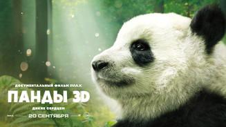 IMAX провел специальный показ нового документального фильма «ПАНДЫ 3D»