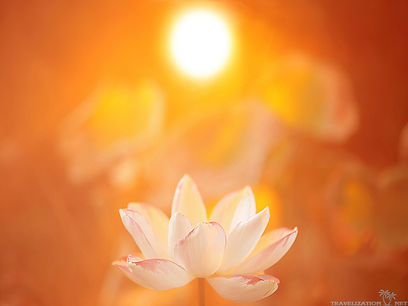 37906165-lotus-wallpaper.jpg