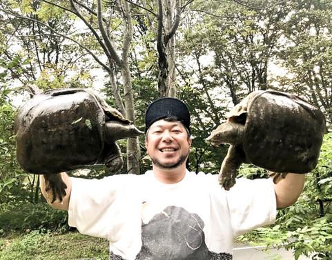 群馬県産の天然スッポン  釣ってます‼️
