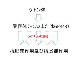 HP用受容体 トリミング.png