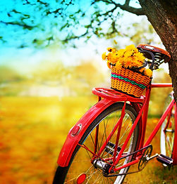 Vintage Bicycle with flowers on summer l