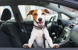 Cute dog sit in the car on the front sea