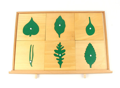 Botany Leaf Cabinet (24 insets) | Montessori Materials | Singapore ...