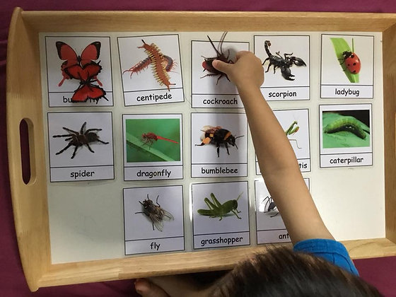 Montessori Insects unit (13 insects)