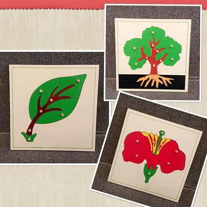 Montessori puzzle : botany (set of 3)