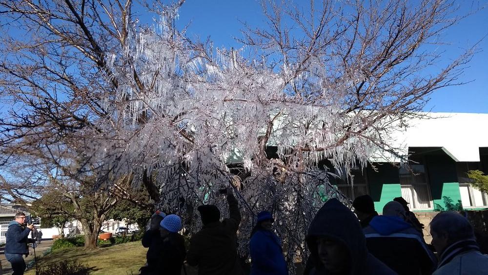 Turistas aproveitam o frio intenso, as paisagens brancas e congeladas e a árvore com cristais de gelo no Centro de São Joaquim. A mínima na cidade foi de -5°C (Foto: Jadson Garcia/Secom)