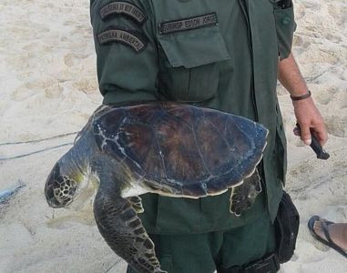 Tartaruga resgatada em Camboinhas (foto Prefeitura de Niterói)