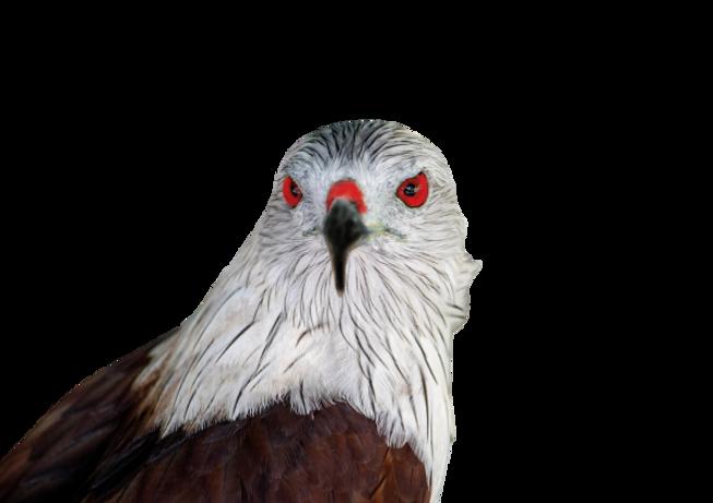 Bluron Bird.png