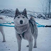 Туры на собачьих упряжках