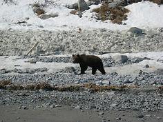 Охота (медведь, снежный баран, лось,олень, перелетная птица)