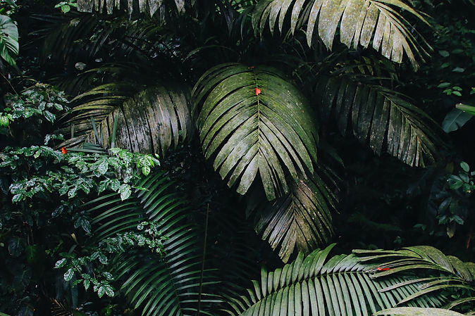Rainforest_Palm.jpg