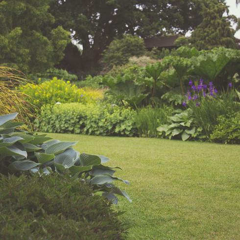 Composition végétale   Espace vert jardin