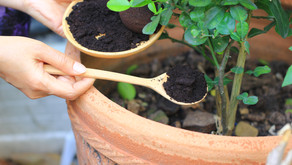 What To Do with Used Coffee Grounds at Home?