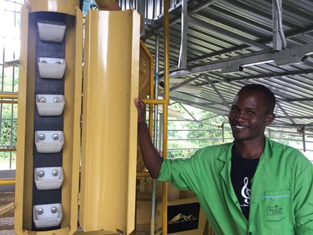 A Business with a Mission: Chepsangor Coffee in Nandi, Kenya