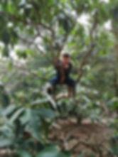Tree climbing.jpg