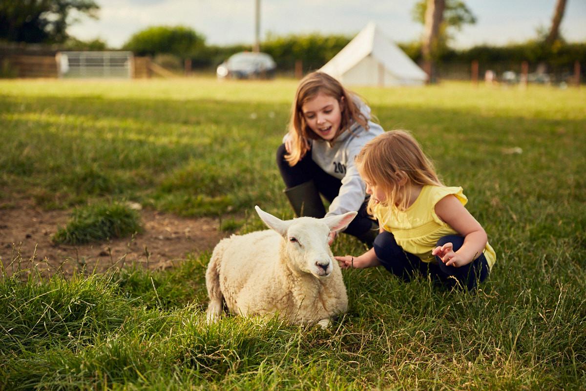 Sheep at High House Farm