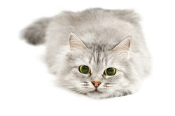 Katzen-Absicherung