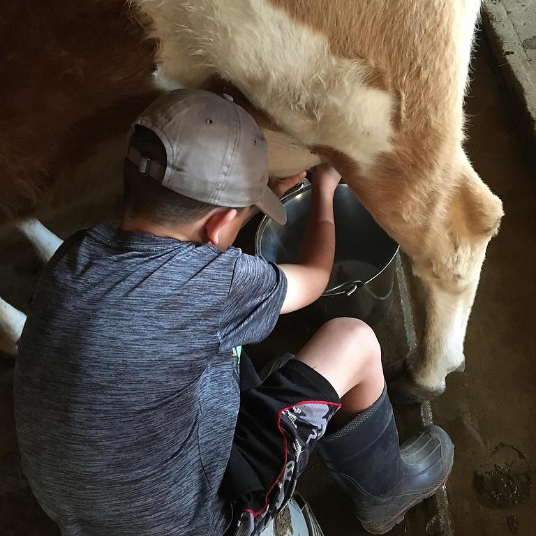 Milk Cows 101