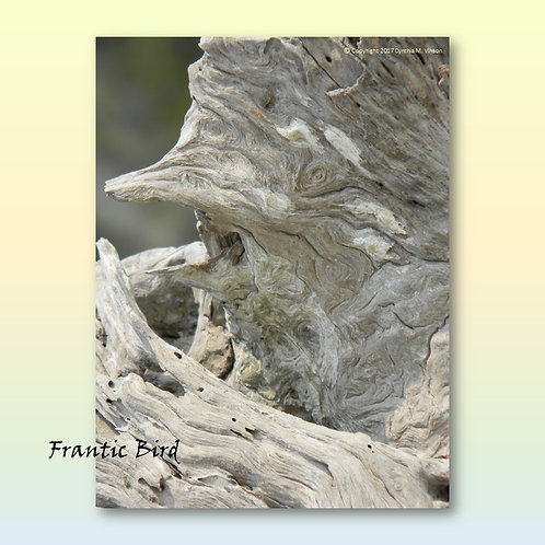 "Double Sided Print of ""Frantic Bird"" & ""Resting Bull"""