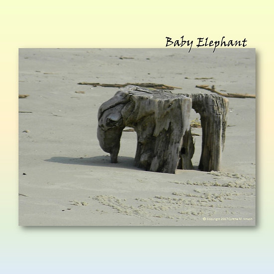 "Double Sided Print of ""Baby Elephant"" & ""Surfacing Whale"""