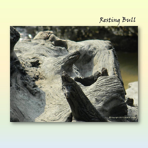 "Double Sided Print of ""Resting Bull"" & ""Frantic Bird"""