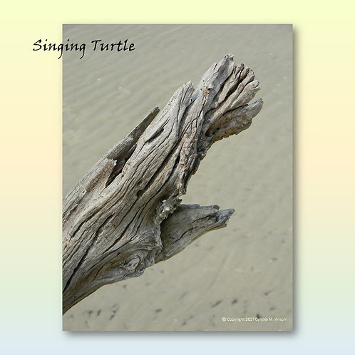 """Double Sided Print of """"Singing Turtle"""" & """"Bowing Duck"""""""