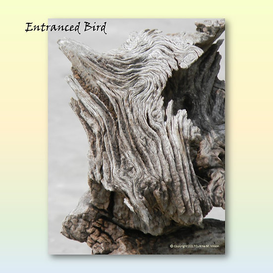 """Double Sided Print of """"Entranced Bird"""" & """"Black Horse"""""""