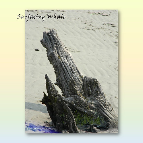 """Double Sided Print of """"Surfacing Whale"""" & """"Baby Elephant"""""""