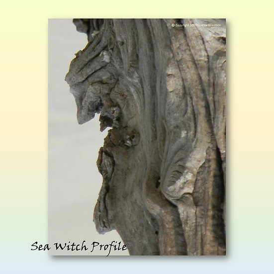 """""""Sea Witch Profile"""" & """"Curious Snake"""" Double Sided Print"""