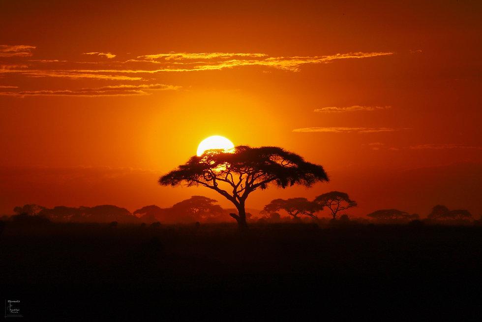 Perfect African Sunset.jpg