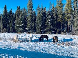 Wild Horses at Boundary RV Park