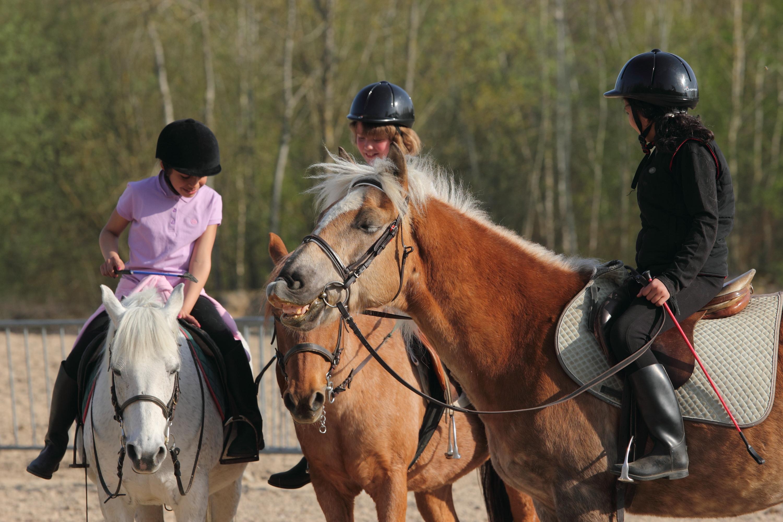 stage, poney, equitation, vanaces