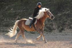 stage, poney, cavalier, galop, centre equestre, loisir