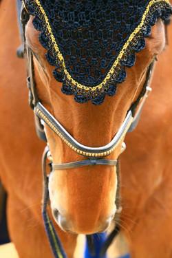 gringo,_voltige,_concours,_équitation,_meaux,_CHM