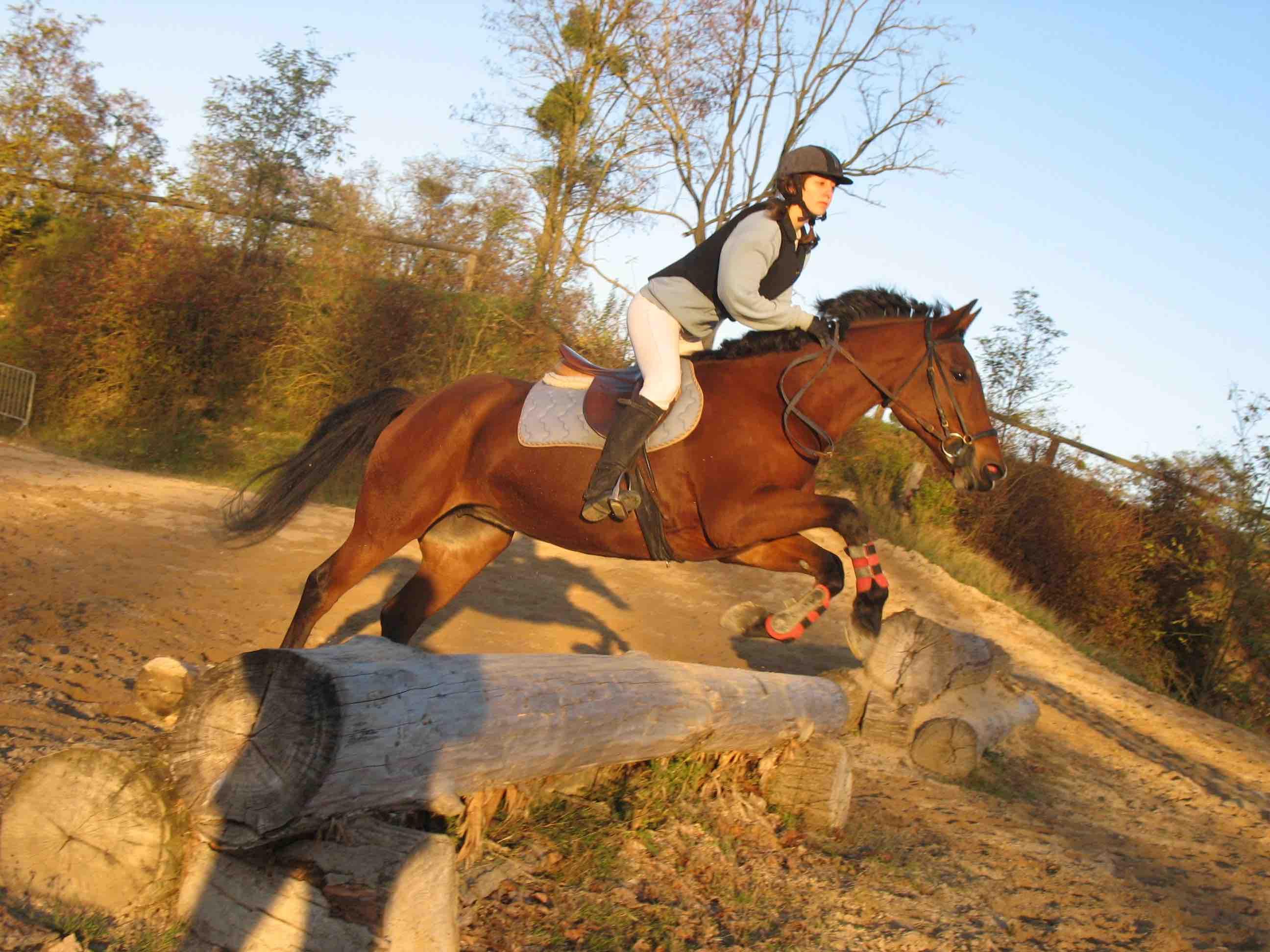 Cross, Parcours, Centre equestre, cheval, CCE